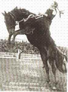 Fannie Sperry Steele, Winnipeg 1913