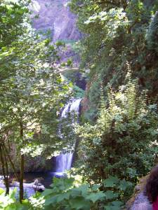 Multnomah thru foliage