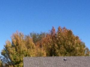 Prescott blue Fall