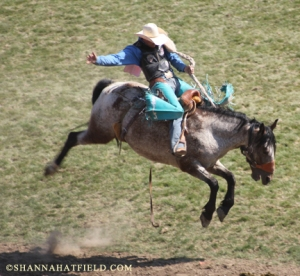 bronc rider 2